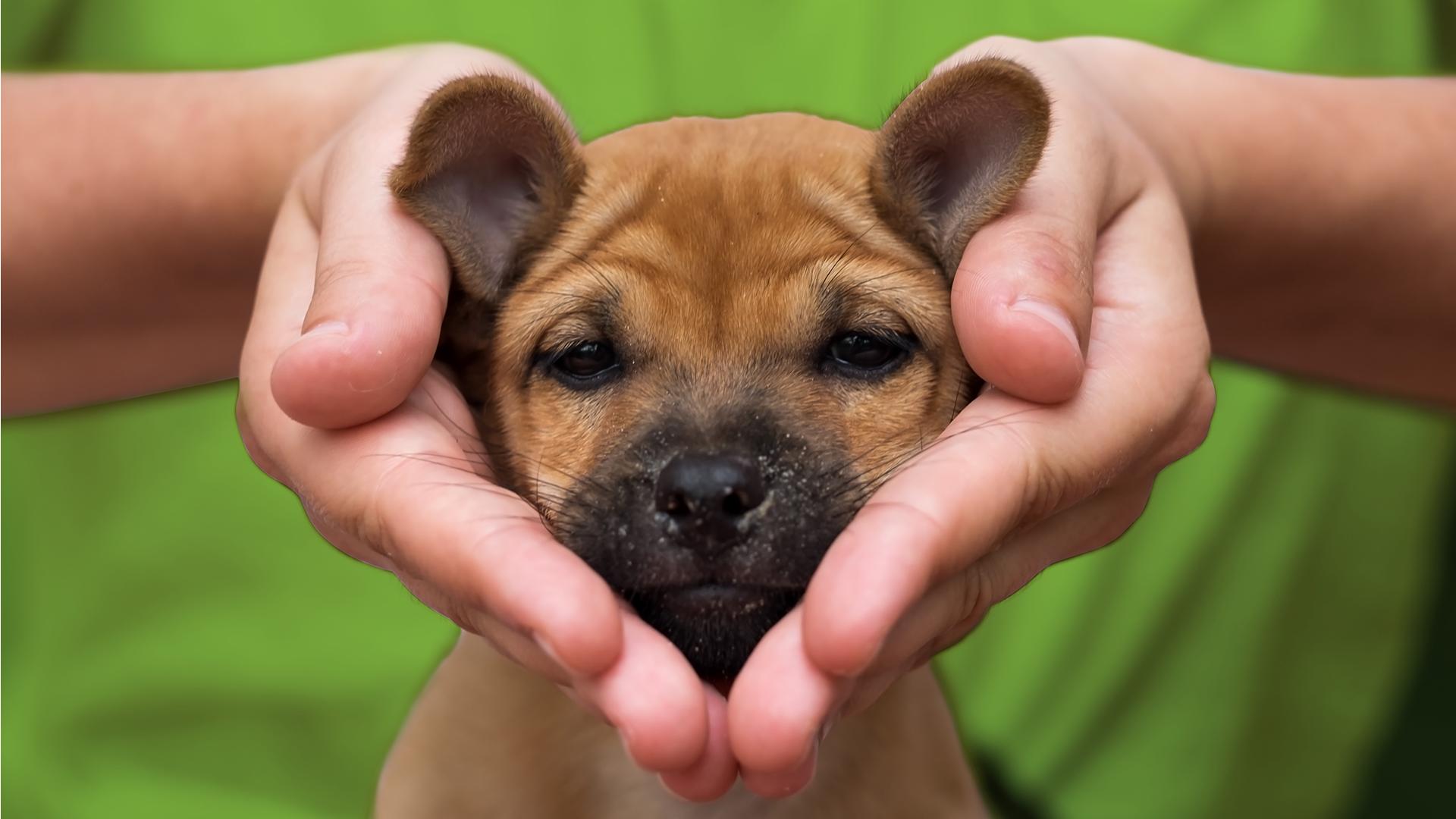 cachorro com cinomose
